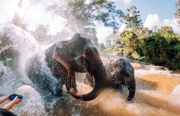elephant-krabi-sp-utazas