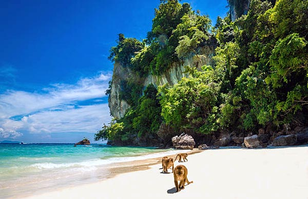 monkey-beach-phi-phi-sp-utazas